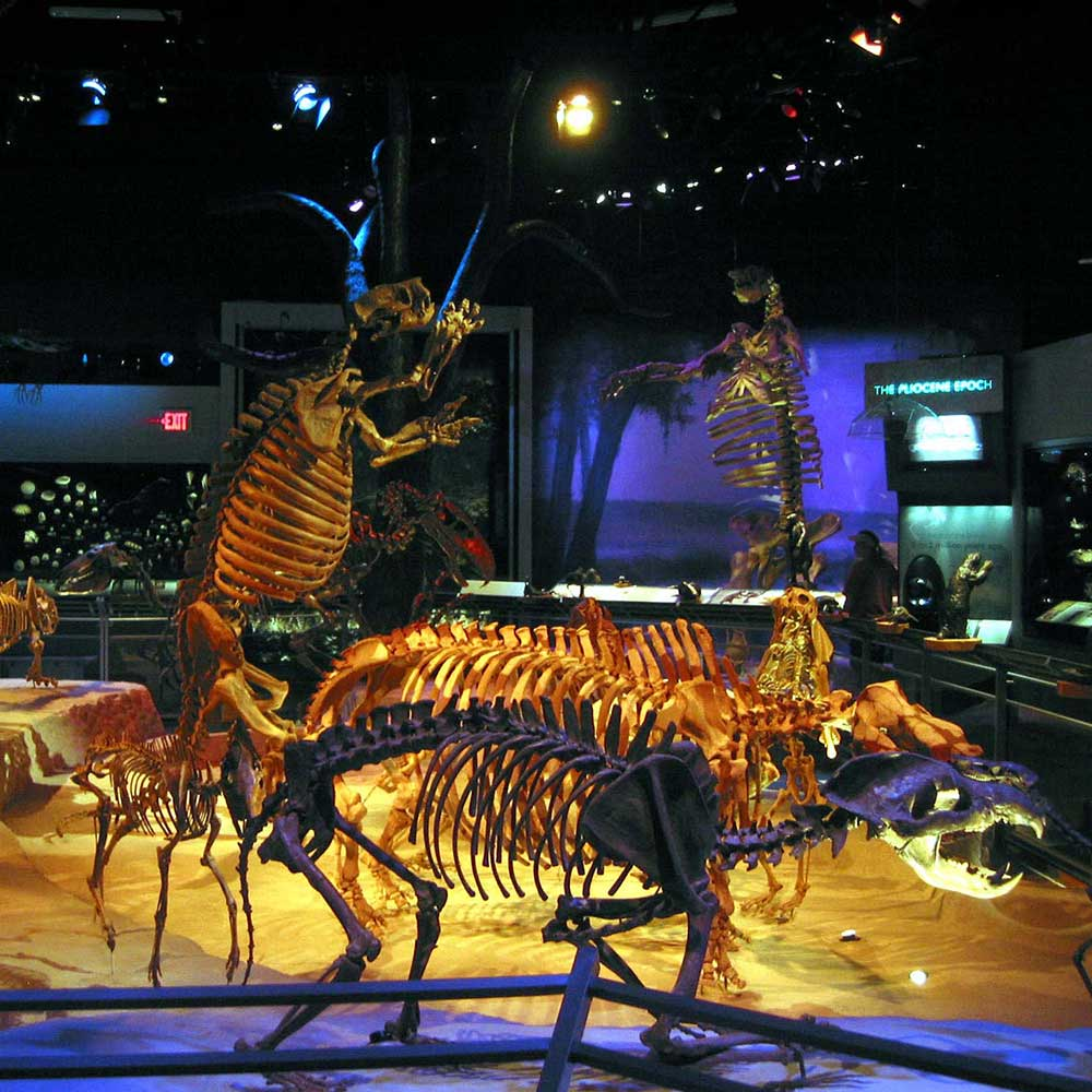 Flmnh_fossilhall-(1)